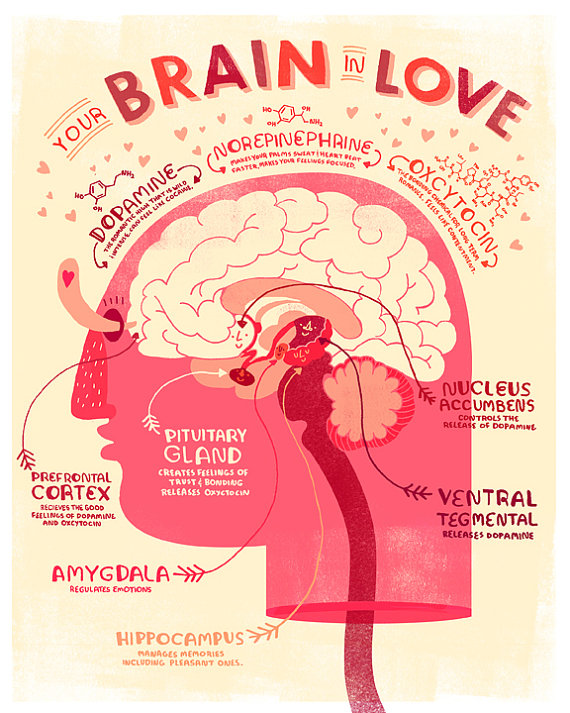 Rachel Ignotofsky - Anatomy In Love-httpwww.rachelignotofskydesign.comlove-anatomy